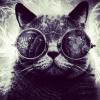 trendycat