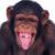 MonkeyEntertain