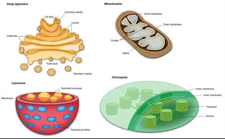 I will design superb medical, scientific illustration, infographic