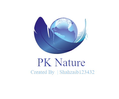 I will design modern and professional logo and graphic design
