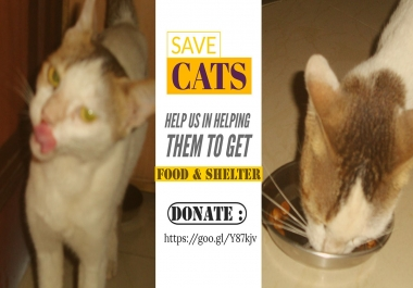 Donation for save cats crowdfunding campaign marketing freelancer